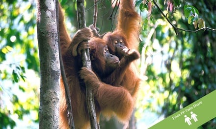 North Sumatra: From $649 Per Person for a 10-Day Tour with Accommodation, Transport and Activities