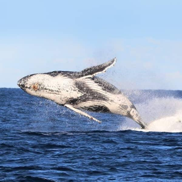 Half-Day Sydney Whale Watching Cruise with Buffet BBQ Lunch