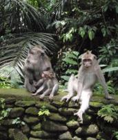Ubud: Day Excursion for Two People with Private Transfers, Guide Service, and Entrance Fees with Bali Sun Tours