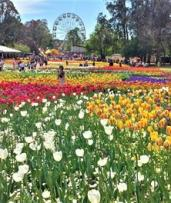 Floriade Tour: One-Day Sydney to Canberra Tour for One Adult or Child with Ozia Tours-Floriade Canberra 2019