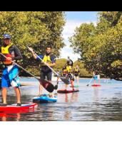 Two-Hour Dolphin Sanctuary Guided Stand-Up Paddleboarding Tour