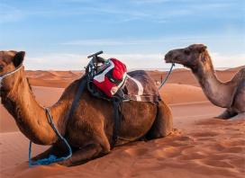 Experience the Best of Morocco: Medinas, Ancient Ruins & World-Heritage Sites