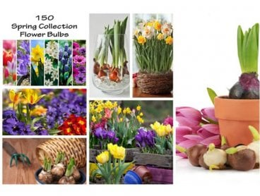 Mothers Day Flower Bulbs, Spring Collection 150 Pack