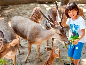 Bali: From $13 for a Bali Day Zoo Admission Ticket