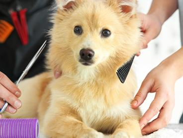 Just $19 for an Online Dog Grooming or Pet First Aid Course, or $29 for Both! (Valued Up To $632)