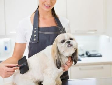 Pamper Package for a Small ($30), Medium, ($35), or Extra-Large Dog ($45) at Happy Paws Pethouse (Up to $95 Value)