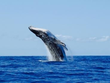 $49 for Two-Hour Whale Watching Cruise for One Person (Up to $99 Value)