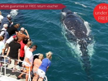 2.5-Hour Whale Watching Tour for One Child ($39) or Four Adults ($209) on Spirit of the Gold Coast (Up to $456 Value)