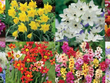 Plant the Garden of Your Dreams with the Spring Bulb Garden Collection Including 150 Flowering Bulbs for Only $29, Delivered (Value $72.80)