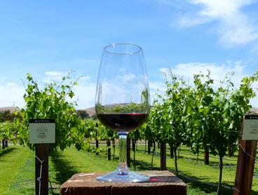 Full-Day Wine Tour of the Beautiful Barossa Valley Including Five Wine Tastings and Lunch is $59 for One Person or $115 for Two (Valued Up To $218)