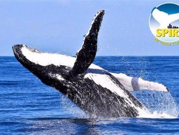 2.5+ Hour Whale Watching Cruise
