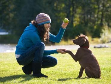 From $49 for 5 Weeks of Dog Training or $99 for a 10-Week Course with Dog Guru, Multiple Locations (Up to $310 Value)