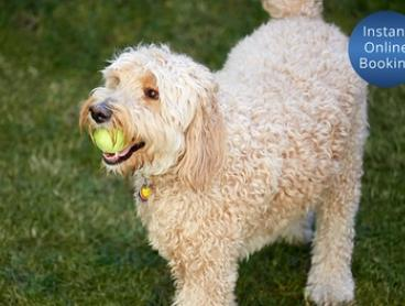 5 Weeks of Dog Training ($49) or a 10-Week Course ($99) with Dog Guru, Multiple Locations (Up to $310 Value)