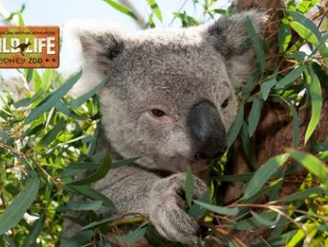 WILD LIFE Sydney Zoo 2-for-1 Offer - Two Adults for $42 and Two Children for $29.50, Darling Harbour (Up to $84 Value)