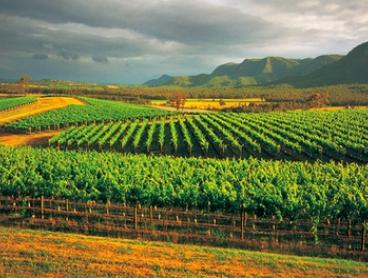 Hunter Valley Wine Tour, Lunch & Transfers: Child ($64) or 1 ($129) or 2 Adults ($254) with AAT Kings (Up to $390 Value)