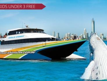 Whale Watching Cruise and Snacks: Child ($39) or Adult ($59) with Gold Coast Whale Adventures (Up to $99 Value)