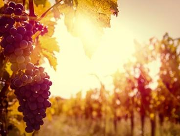 Grampians: 2 or 3 Nights for Two with Breakfast, Wine, and Late Check-Out at Summerfield Winery and Accommodation