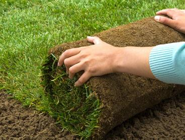 Professionally Prepared and Installed Turf for Your Garden, Starting at $995 for up to 50sqm Including Removal of Old Grass (Valued Up To $3,620)