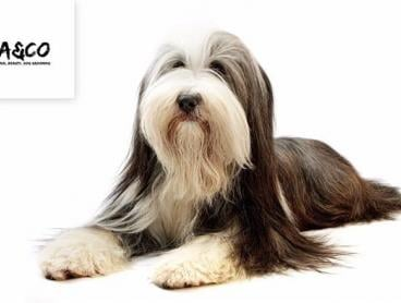 Dog Grooming Value Spend