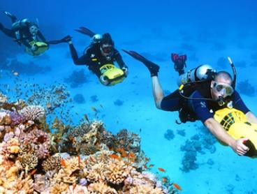 From $199 (+$50pp Equipment Hire) for an Open Water Dive Course with Sydney Dive Safari (Up to $1,596 Value)