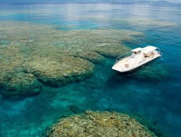 Great Barrier Reef: Half-Day Arlington Reef Tour for Up to 4 + Lunch & Option for Snorkel Safari: Sunlover Reef Cruises