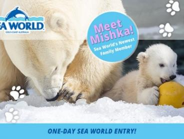 Sea World: Child ($69) or Adult ($79) Single Day Pass (Up to $89 Value*)
