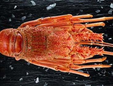 1kg of Fresh South Australian Crayfish from Planet Seafood (Up to $150 Value)