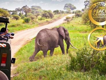 South Africa Safari Tour w/ Flights