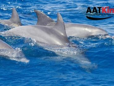 Port Stephens Dolphin and Dunes Tour: Child ($49), or One ($130) or Two Adults ($255) with AAT Kings (Up to $398 Value)