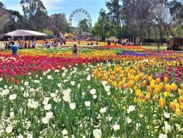 Floriade Tour: One-Day Sydney to Canberra Tour for One Adult or Child with All Day Tours-Floriade Canberra 2018