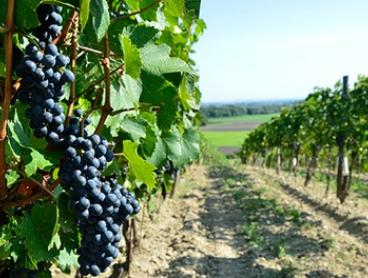 Hunter Valley Tour with Lunch for One ($64) or Two People ($125) with Amazing Tours Sydney (Up to $320 Value)