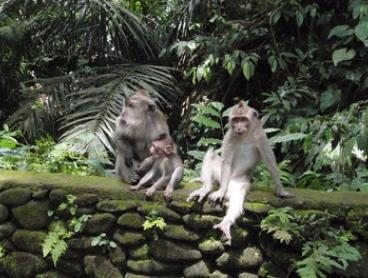 Ubud: Day Excursion for Two-Five People with Private Transfers, Guide Service, and Entrance Fees with Bali Sun Tours