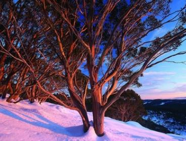 Mt Baw Baw: 1 or 2 Nights for 2, 4 or 36 People in a Self-Catering Lodge at EdSki Lodge, Victoria